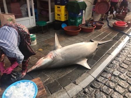 IMG_5619.jpgサメ.jpg